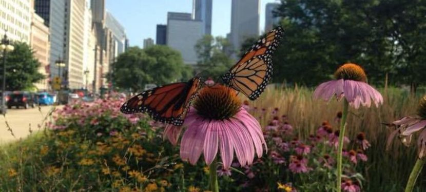 Save the World With a Butterfly Garden